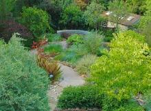 Dry climate rear gardens cascade down the steep slope toward a concrete bench
